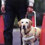 盲導犬のことを知ろう