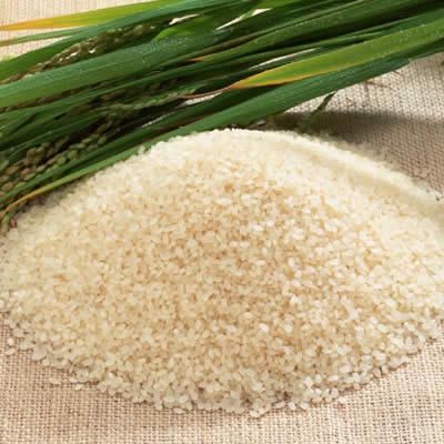 米づくりの苦労や工夫