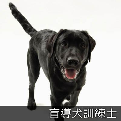 盲導犬訓練士