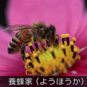 養蜂家(ようほうか)