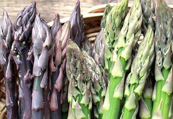 朝採り新鮮グリーンと紫アスパラガスのセット