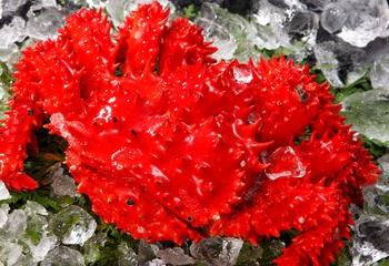 浜茹で花咲がに姿 鮮度抜群「幻の蟹」