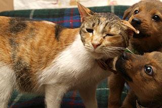捨てられた犬や猫たちを救おう