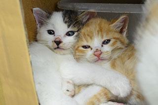 小屋で一緒に過ごす子猫たち