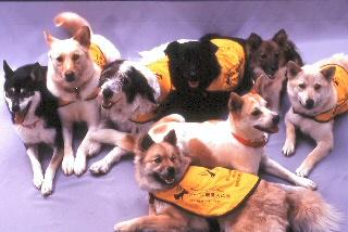 候補犬は保健所などで選ばれます
