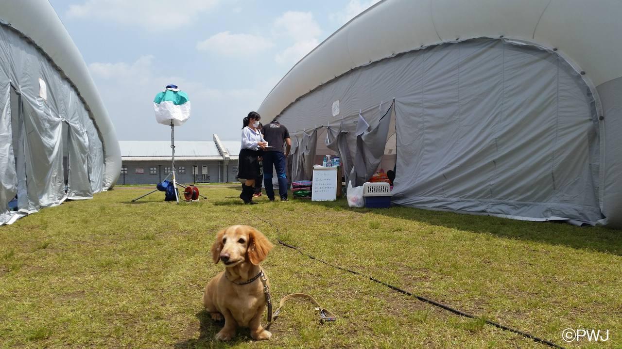 ペット同伴世帯用の避難所運営にご支援を 熊本地震緊急支援