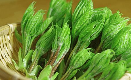天然山菜コシアブラ