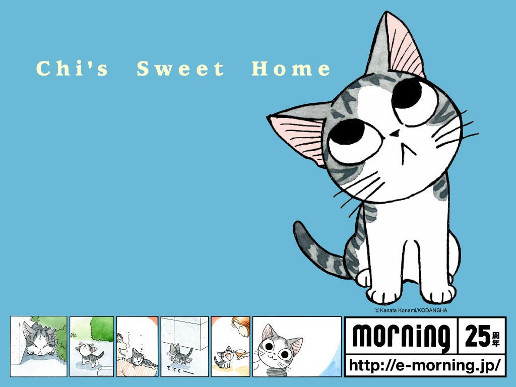 小起的可爱壁纸 甜甜私房猫吧 百