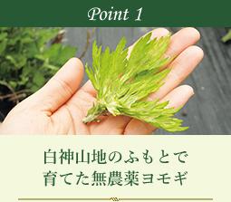 Point 1 白神山地のふもとで育てた無農薬ヨモギ