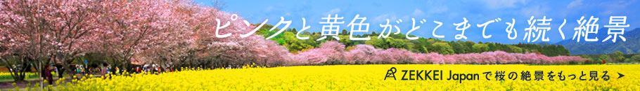ピンクと黄色がどこまでも続く絶景  ZEKKEI Japanで桜の絶景をもっと見る