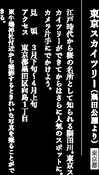 東京スカイツリー(隅田川公園より)東京都 江戸時代から桜の名所として知られる隅田川。東京スカイツリーができてからはさらに人気のスポットに。カメラ片手にでかけよう。 見頃:3月下旬〜4月上旬 アクセス:東京都墨田区向島1丁目 ※牛嶋神社付近から撮影するときれいな写真を撮ることができる。
