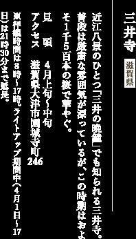 三井寺滋賀県 近江八景のひとつ「三井の晩鐘」でも知られる三井寺。普段は厳粛な雰囲気が漂っているが、この時期はおよそ1千5百本の桜で華やぐ。 見頃:4月上旬〜中旬 アクセス:滋賀県大津市園城寺町246 ※拝観時間は8時〜17時。ライトアップ期間中(4月1日〜17日)は21時30分まで延長。