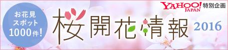 桜開花特集