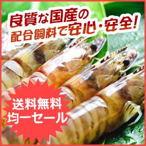 沖縄県久米島産 車海老 活〆急速冷凍